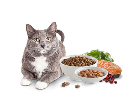 Core Cat Food Protein