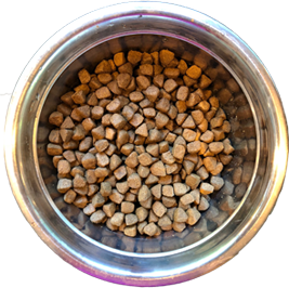 bowl one of dog food showing low diversity