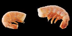 https://wellnesspetfood.com.au/cat-wellness/natural-cat-food/signature-selects/tuna-shrimp/